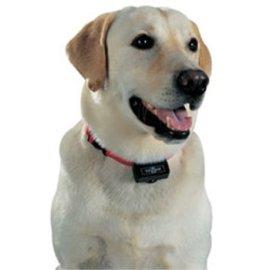 PetSafe PBC-102 Standard Bark Control Collar