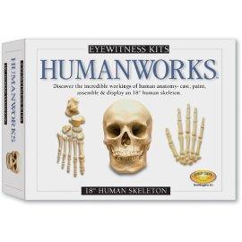 Eyewitness Kit: 18 Human Skeleton Casting Kit