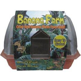 Windowsill Greenhouse - Banana Farm