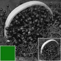 Cokin X004 Filter, X-pro, Green