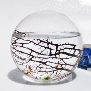 EcoSphere Closed Aquatic Ecosystem (Large Sphere)